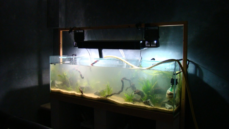 600 litres amazonien 600_li12
