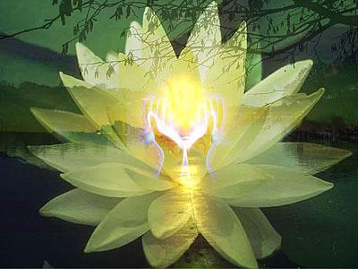 Présence Lotusu10