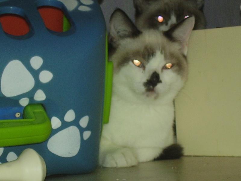 yumi, Pépite et Méko,  3 mois Meko_210