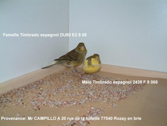 Canaris Timbrado espagnol Couple11