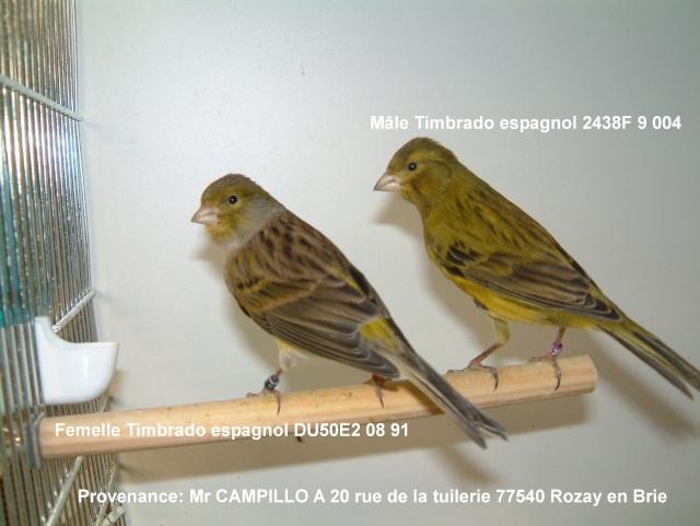 Canaris Timbrado espagnol Couple12