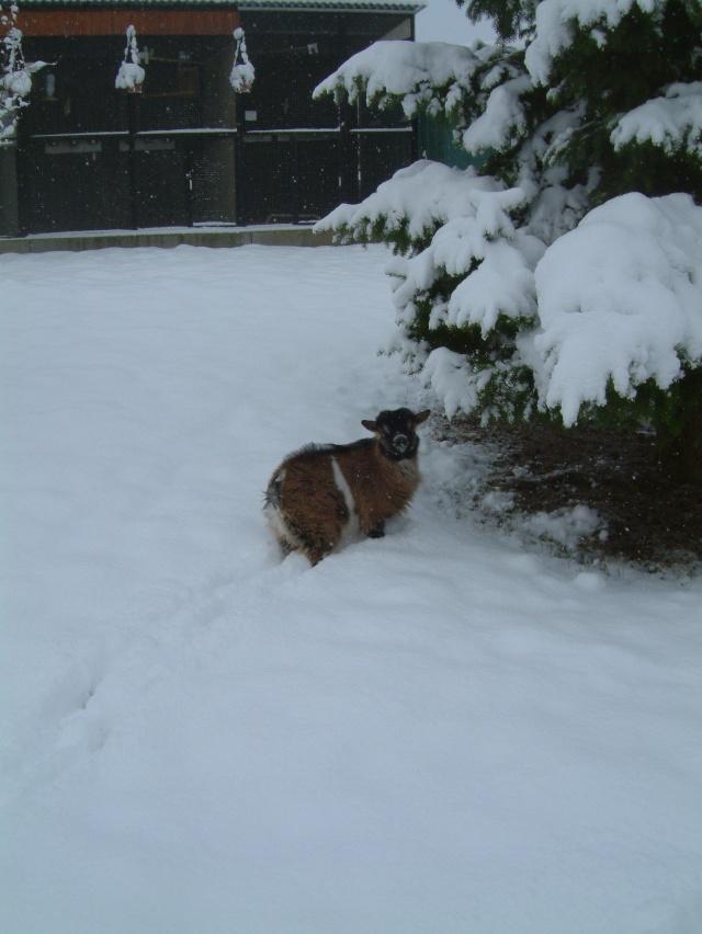 DAGOBERT dans la neige Dagobe10