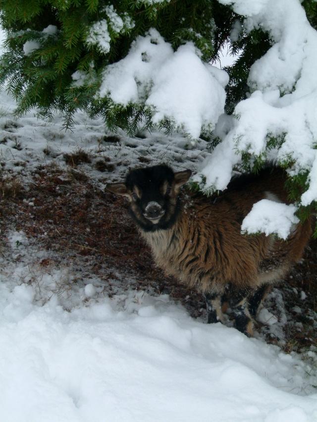 DAGOBERT dans la neige Dagobe11