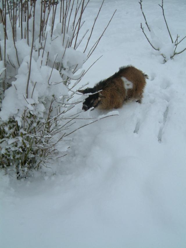 DAGOBERT dans la neige Dagobe12