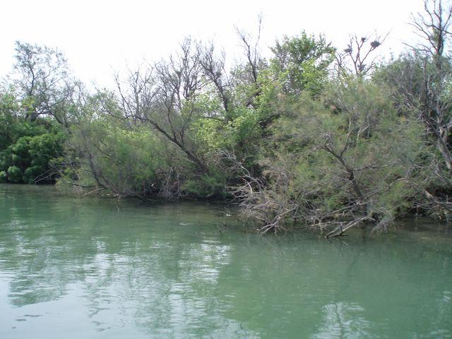 L'embouchure du Rhone a la mer P1010026