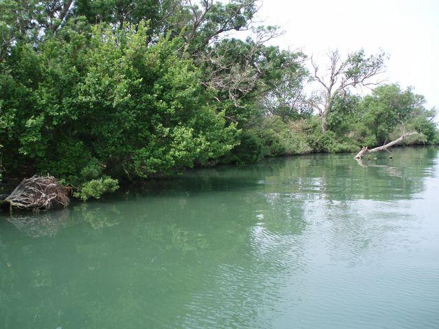 L'embouchure du Rhone a la mer P1010027