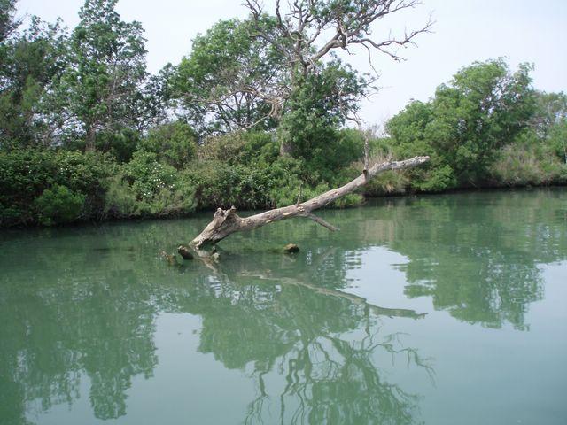 L'embouchure du Rhone a la mer P1010028