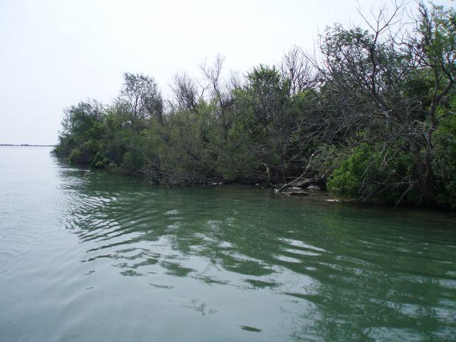 L'embouchure du Rhone a la mer P1010031