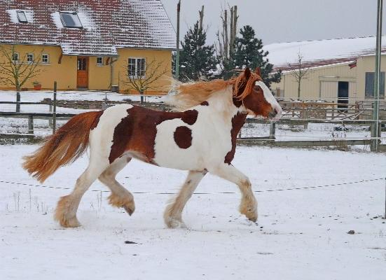 Il neige aussi à Colmar, la suite P1030712