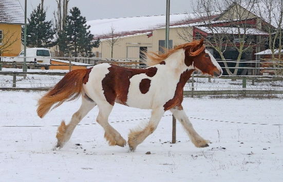 Il neige aussi à Colmar, la suite P1030713