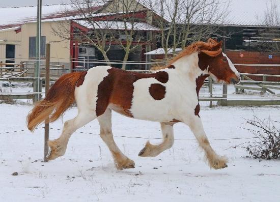 Il neige aussi à Colmar, la suite P1030714