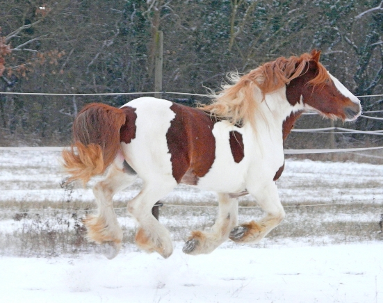 Il neige aussi à Colmar, la suite P1030718