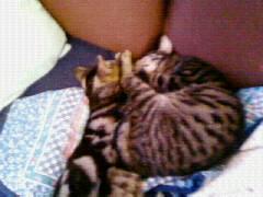 Simba et Peeter, petites boules d'amour... Robin_10