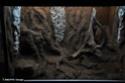 Aménagement d'un terrarium en Elastopur 202b10