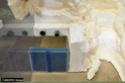 Aménagement d'un terrarium en Elastopur 28b11