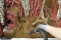 Aménagement d'un terrarium en Elastopur 56b11