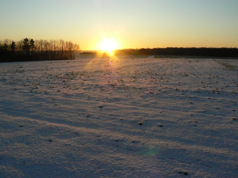 La neige dans la somme P1040616