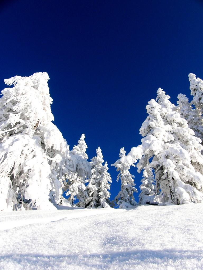 Neige et ski à l'étranger 41856810