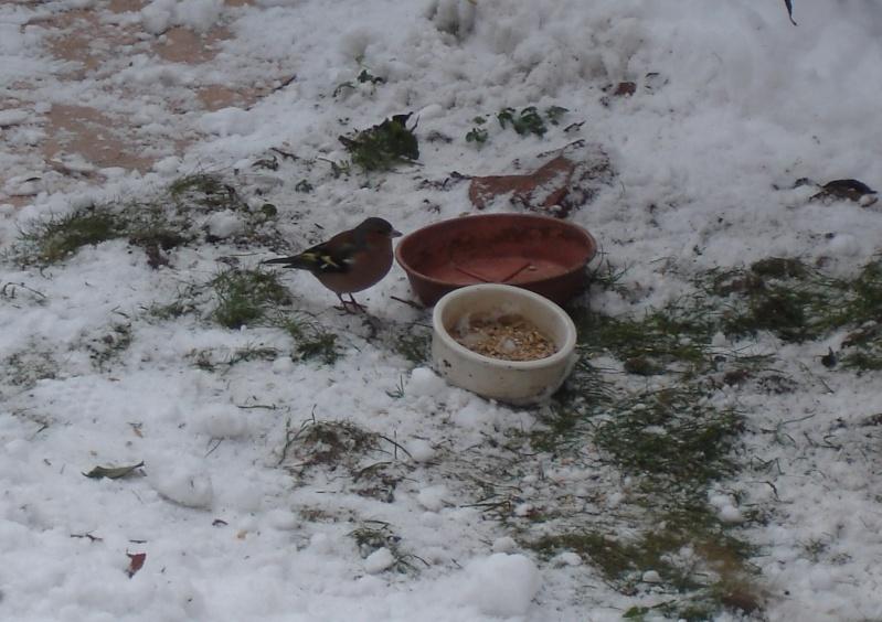 il neige, pensons à nos petits amis de la nature Dsc07110