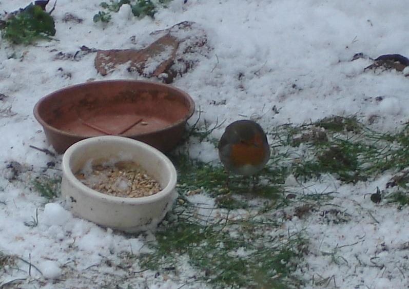 il neige, pensons à nos petits amis de la nature Dsc07111