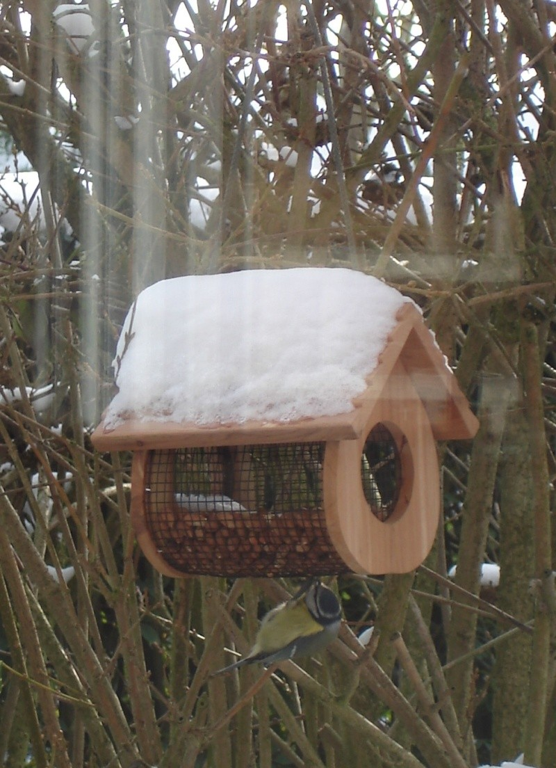 il neige, pensons à nos petits amis de la nature Dsc07112