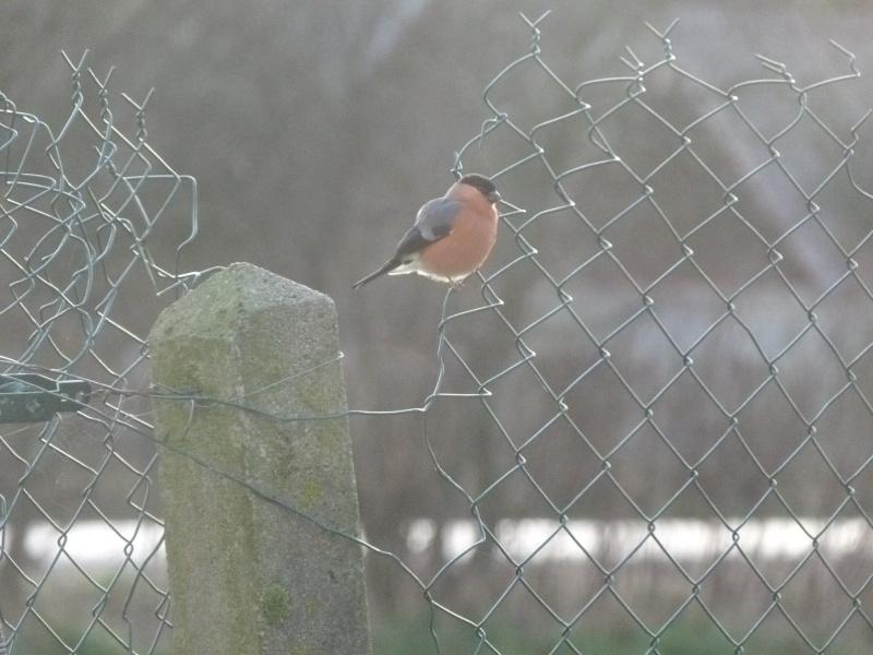 le self service des oiseaux au jardin P1220110