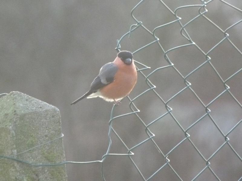 le self service des oiseaux au jardin P1220111