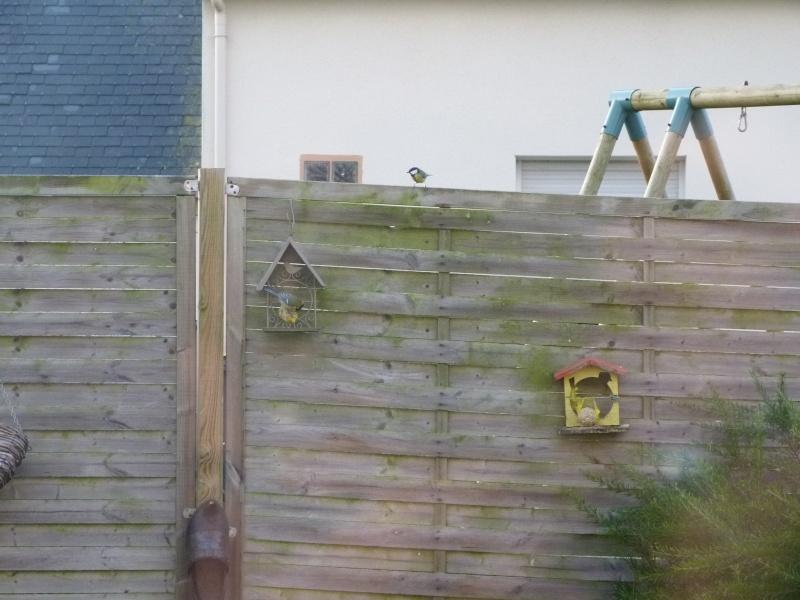 le self service des oiseaux au jardin P1220112