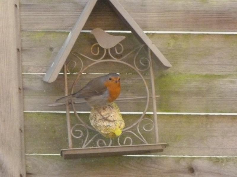 le self service des oiseaux au jardin P1220117