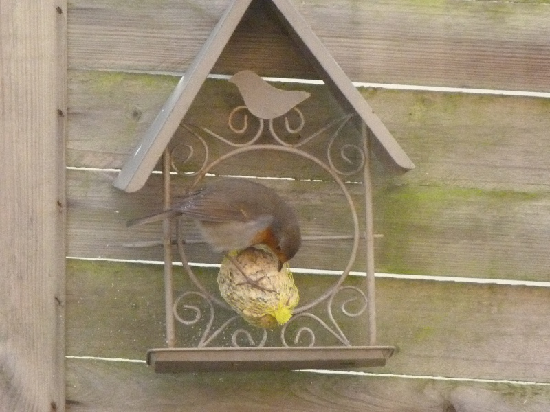 le self service des oiseaux au jardin P1220118