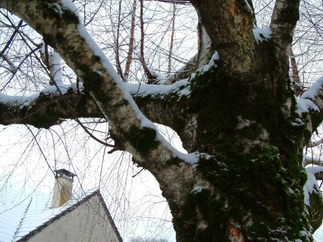 Mes taches de bonheur sous la neige !! Dscf0012