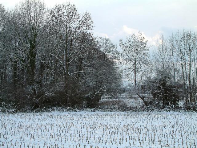 Mes taches de bonheur sous la neige !! Dscf0017