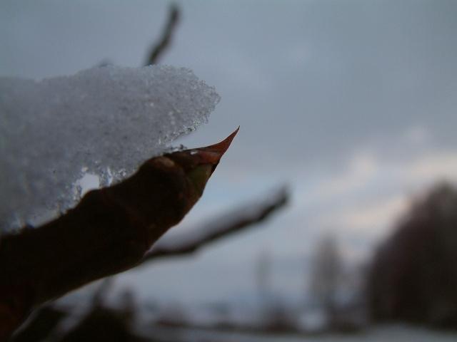 Mes taches de bonheur sous la neige !! Dscf0019