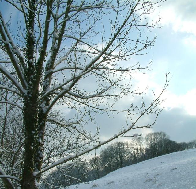Mes taches de bonheur sous la neige !! Dscf0025