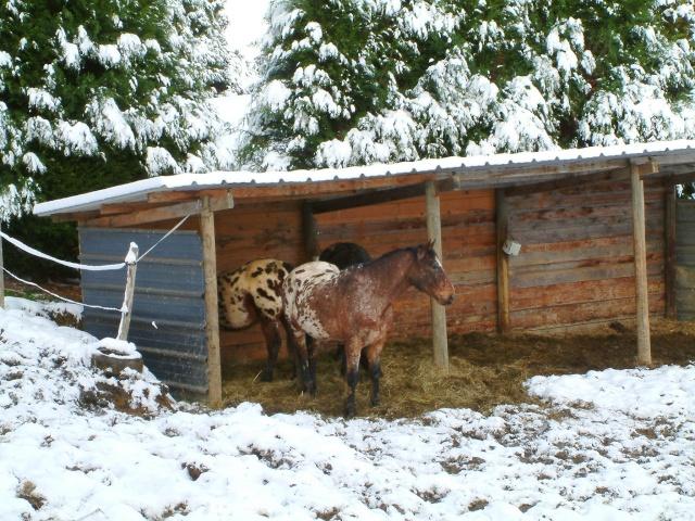 Mes taches de bonheur sous la neige !! Dscf0026