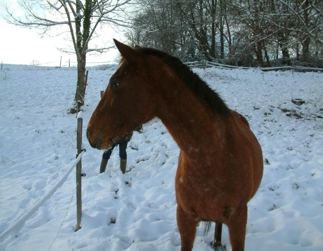 Mes taches de bonheur sous la neige !! Dscf0029