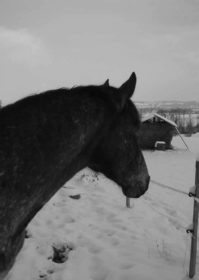 Mes taches de bonheur sous la neige !! Dscf0033