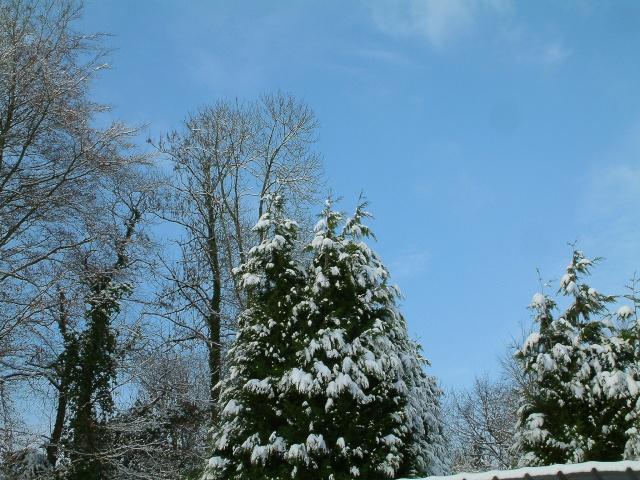 Mes taches de bonheur sous la neige !! Dscf0034