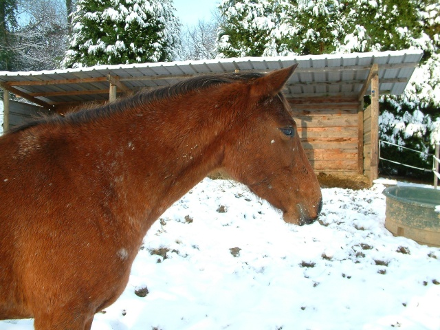Mes taches de bonheur sous la neige !! Dscf0036