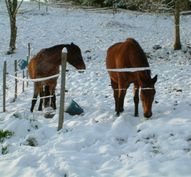 Mes taches de bonheur sous la neige !! Dscf0037