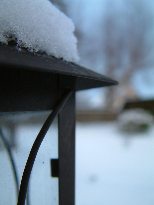 Mes taches de bonheur sous la neige !! Dscf0111