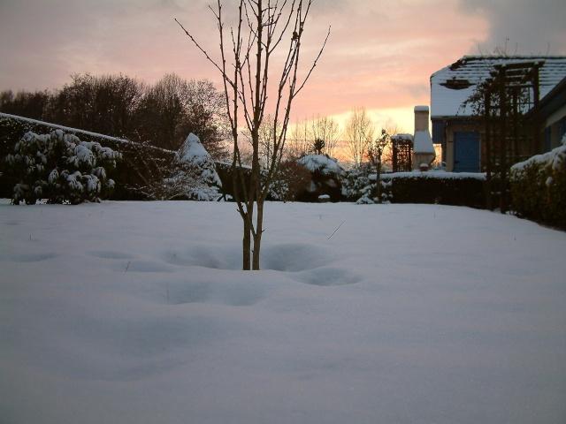 Mes taches de bonheur sous la neige !! Dscf0112