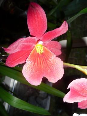 les soldes chez les orchidées P1040225