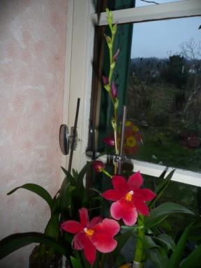 les soldes chez les orchidées P1040227