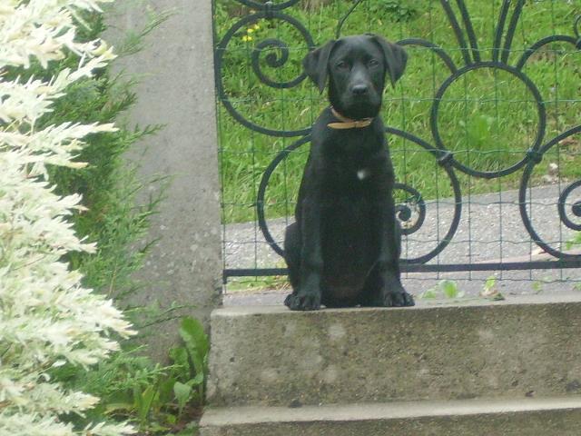 éna, née le 15 04 2009 21811