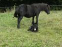Mini mule Vaga_010
