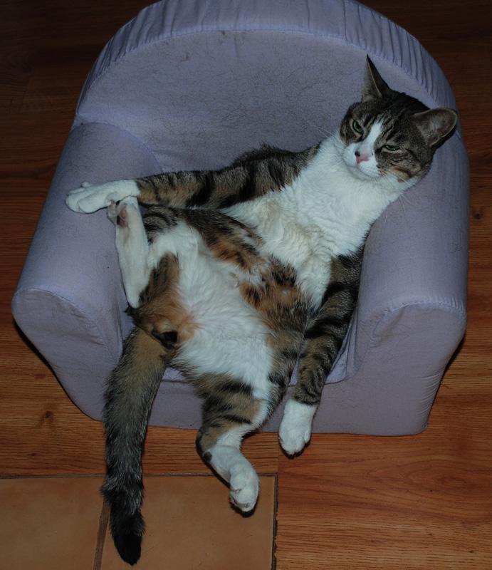 Mon chat Astro le beau Astro-14