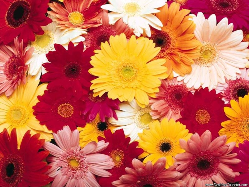 Ириска, с Днём рождения! Flower10