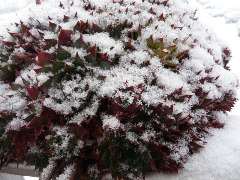 C'est beau ,mais c'est pas chaud Neige_15
