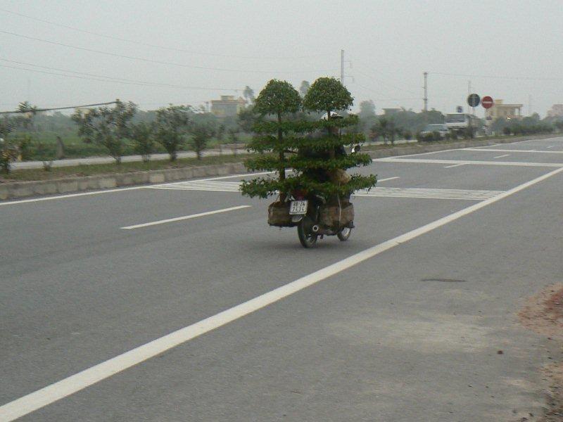 J'ai reçu cette photo du Vietnam P1060111